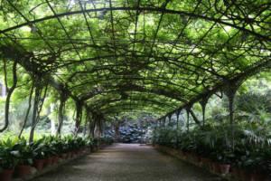 The Concepcion Historic Botanical Garden